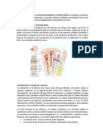 Describa y Grafique Las Causas de Insuficiencia Renal Crònica .....................2