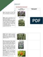 PRUEBA 4 Flora.pdf