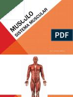 el musculo