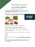 Plantas Para Adelgazar Rápidamente y Como Tomarlas