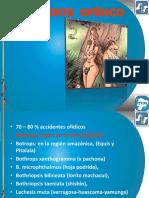 OFIDIOS   -   VEGETALES  2014.pptx