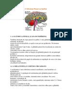 A Glândula Pineal Ou Epífise