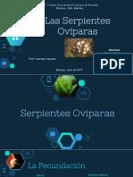 APRENDAMOS DE LAS SERPIENTES OVIPARAS
