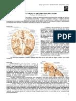 NEUROANATOMIA 11 - Estrutura e Funções Subtálamo, Epitálamo e Tálamo (2012).pdf