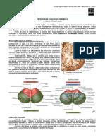 NEUROANATOMIA 09 - Estrutura e Funções do Cerebelo - MED RESUMOS 2012.pdf