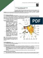 NEUROANATOMIA 12 - Hipotálamo (2012).pdf