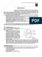 NEUROANATOMIA 17 - Formação Reticular  - MED RESUMOS 2012.pdf