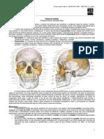 NEUROANATOMIA 22 - Ossos do Crânio - MED RESUMOS 2012.pdf
