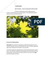 photosynthesisreading assignment