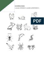 Animales Vertebrados e Invertebrados.