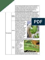 Evolución de los tipos de plantas