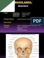 anatomie_scurt