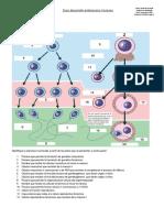 Guía Desarrollo Embrionario