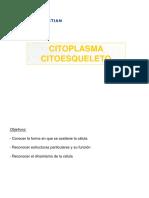 Clase 10- Citoesqueleto