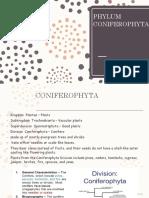 Coniferophyta & Angiospermophyta