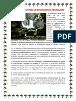 DÍA INTERNACIONAL DE LOS BOSQUES TROPICALES.docx
