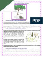 DIBUJAR UNA PLANTA DE PINO Y SEÑALAR SUS ÀRTES  PRINCIPALES.docx