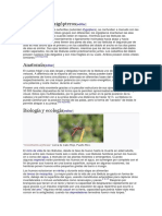 Anisópteros y Zigópteros
