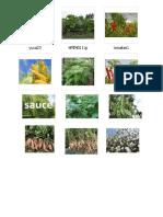 Plantas Nativas de Ica