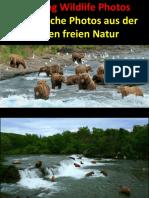 Fotos-Amazing Wildlife.pps
