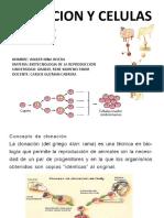 CLONACION DE DOLLY Y CELULAS MADRE.pptx