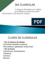 Sistema Glandular