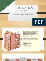 Cicatrización Osea (1)