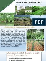 Clasificación de Los Sistemas Agroforestales