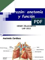 Anatomia Cardiaca 2013
