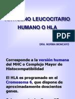 Antígeno Leucocitario Humano o Hla