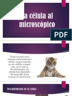 La Célula Al Microscópico