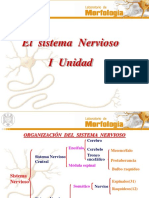 el-sistema-nervioso22-1.ppt
