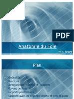 6-anatomie du foie