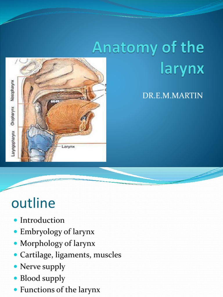 Modern Anatomy Of The Larynx Images - Anatomy and Physiology Tissue ...