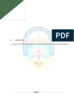 233651438-Citomorfologia-de-Las-Celulas-Sanguineas-Patologicas.docx