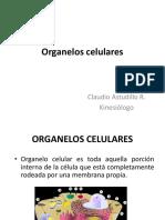 Biología Clase 5