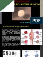 2 Embriología Del Sistema Nervioso
