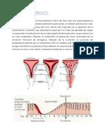 ciclo uterino