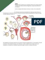 Ontogénesis Del Sistema Nervioso