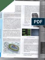 CELULA PROCARIOTA 2do.pdf