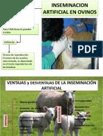 Inseminacion Artificial en Ovinos