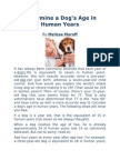 Determine a Dog' Age in Human Years