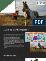 Aines y Aies en caballos