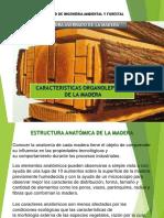 Características Organolépticas de La Madera