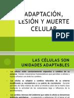adaptacinlesionymuertecelularr-120608185617-phpapp01.pptx