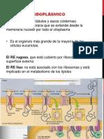 Biolog a Celular y Molecular B