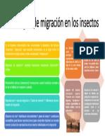 Estrategias de Migración en Los Insectos