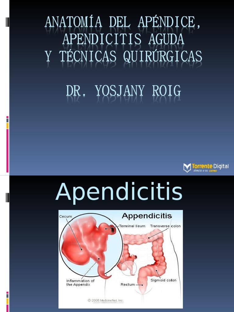 Anatomia Del Apendice New