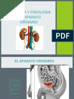 5. Sistema Urinario