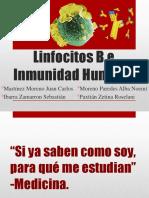Linfocitos B e inmunidad Humoral